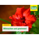 Gagnez un flacon d'engrais de 750 ml pour vos fleurs