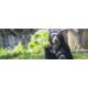 Gagnez vos entrées familiales au Zoo de Zürich et des peluches